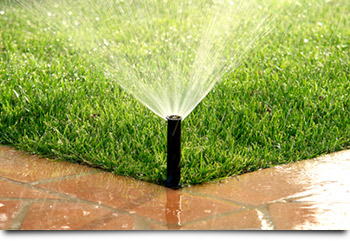winter watering services denver