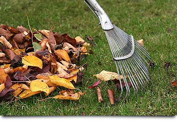 fall clean-ups in denver area