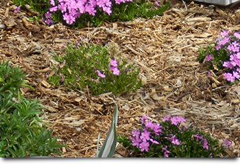 plant and mulch maintenance denver